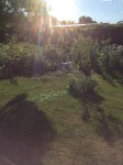 Backyard View of Sun with Garden